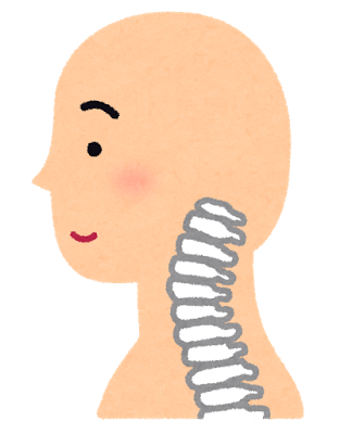 頸椎イラスト